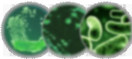 Legionella (1)